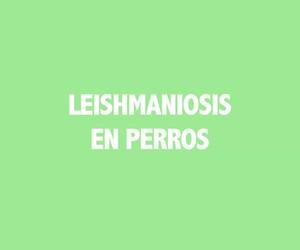 Clínicas veterinarias en San Blas, Madrid: Los Alpes y II
