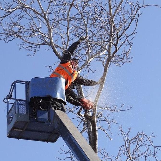 5 razones que justifican la poda de árboles