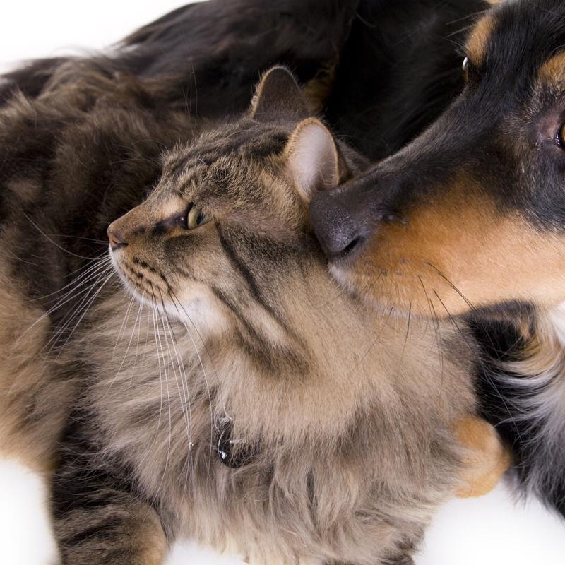 Veterinario: Productos y Servicios de Mundo Mascota