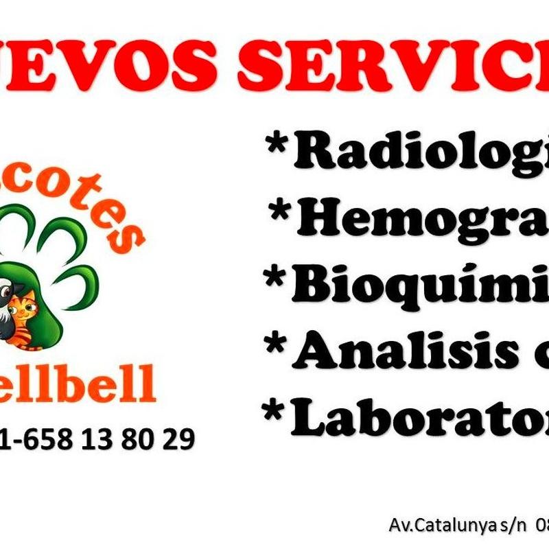 NUEVOS SERVICIOS EN MASCOTES CASTELLBELL: Productos y servicios de JORDI / DAVINIA