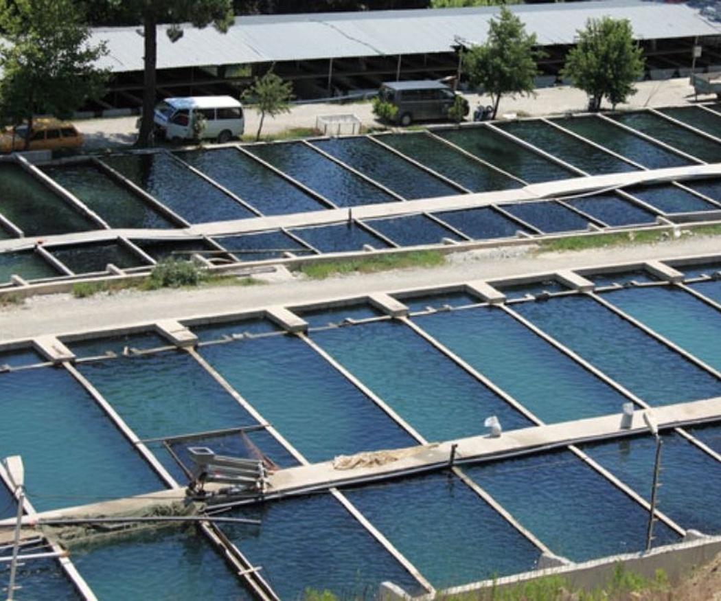 El agua en las piscifactorías (I)