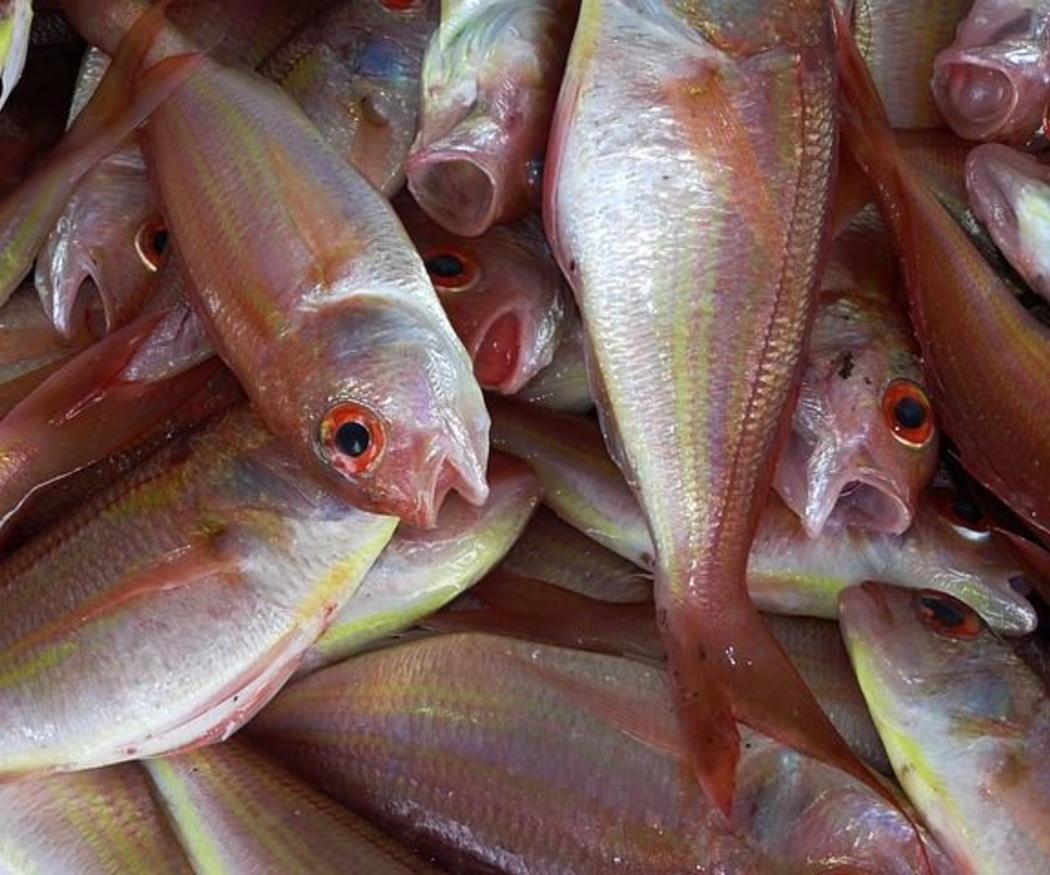 Descubre la importancia del pescado en una dieta sana y equilibrada