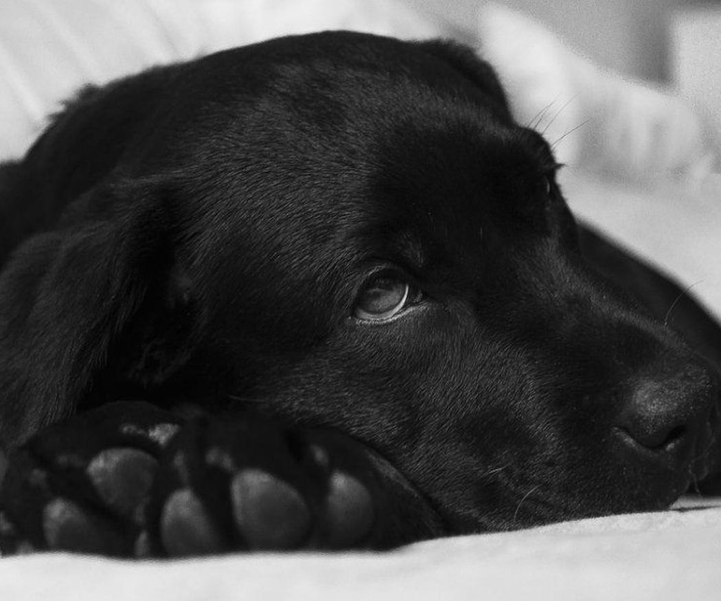 Los golpes de calor en los perros