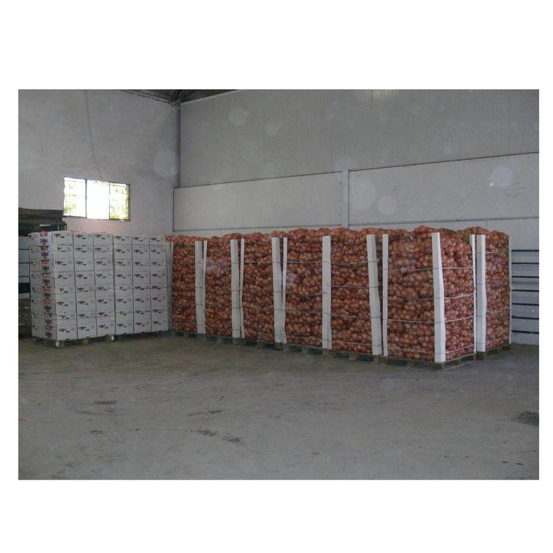 Venta al por mayor de cebollas: Servicios de Cebestur