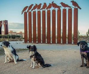 Cría de animales en Zaragoza