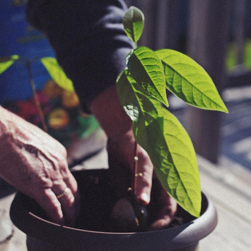 Siembras: Productos y Servicios de Jardines Patxi Lorategiak
