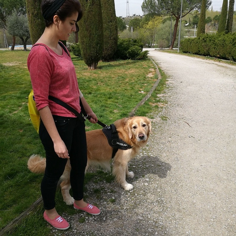Servicios de paseo y cuidados a domicilio: Servicios de Orejotas
