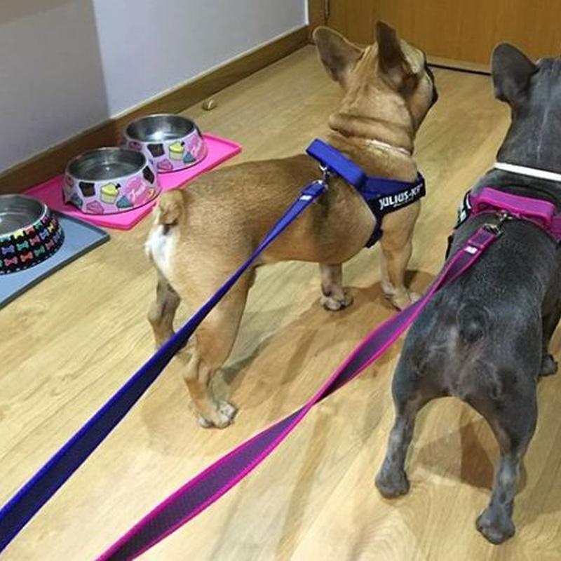 Accesorios para mascotas: Servicios Veterinarios de Kan's&co Clínica Veterinària