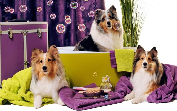Peluquería canina a domicilio: Servicios de Gos Net Mobil