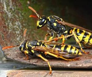 Eliminación de plagas de avispas y abejas en Murcia
