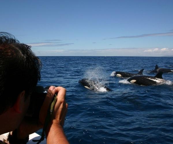 Orcas (3 horas)