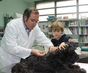 Veterinarios vacunas Zaragoza