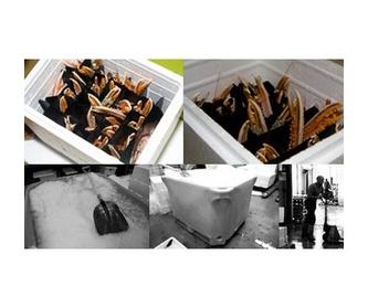 Bivalvos: Productos y Servicios de Peixes Vimar