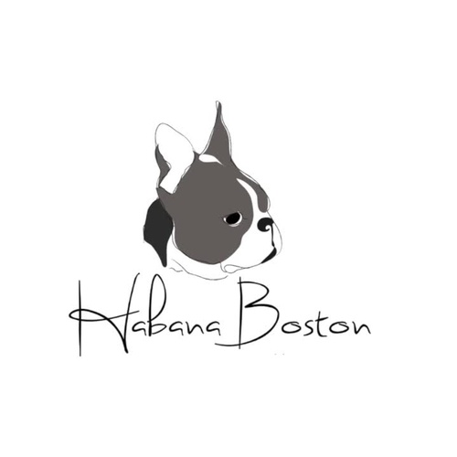 LA MEJOR CLÍNICA VETERINARIA QUE PUEDAS ENCONTRAR: HABANA BOSTON