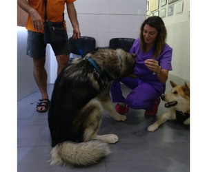 Veterinario de medicina preventiva en Llíria, Valencia