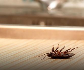 Eliminación de cucarachas en Cádiz