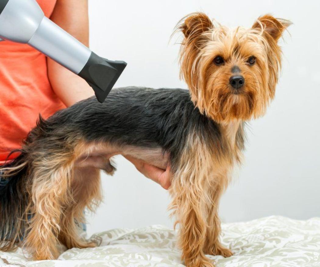 La importancia de dejar en manos de profesionales el corte de pelo de tu perro