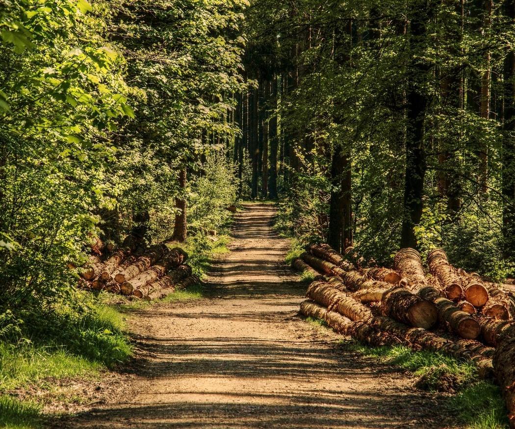 La madera, símbolo natural de construcción