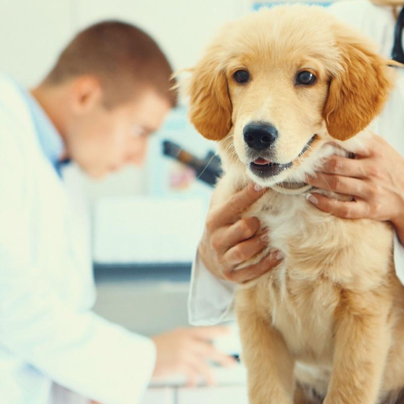 Medicina interna: Productos y Servicios de Clínica Veterinaria Manises