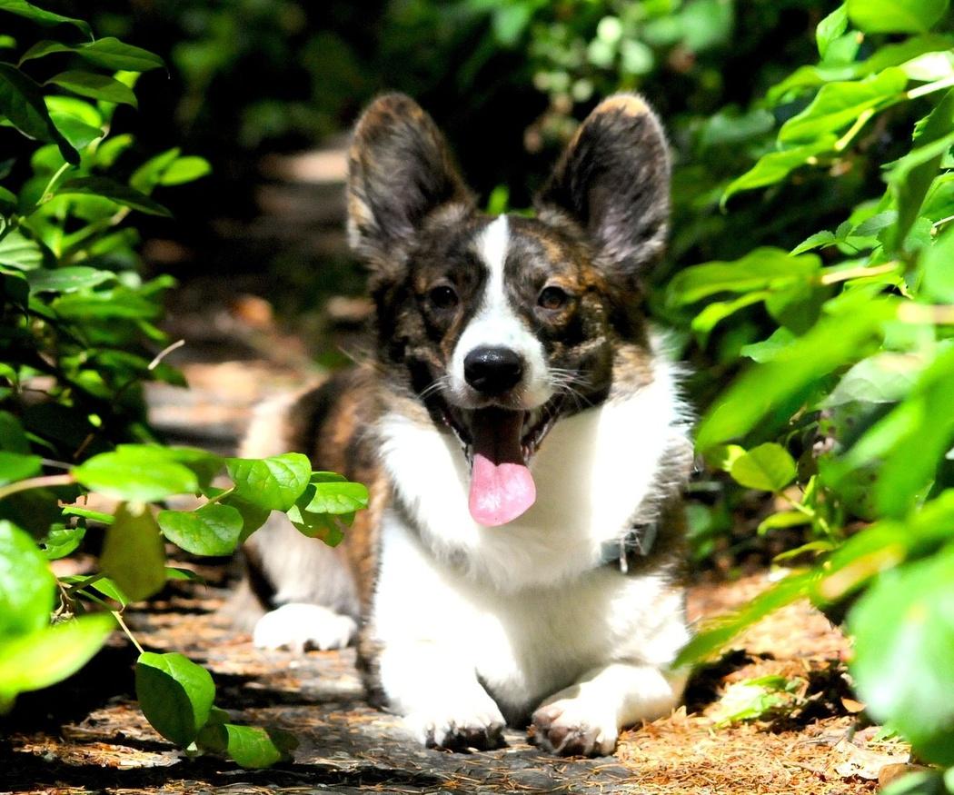 Beneficios de esterilizar a tu perro