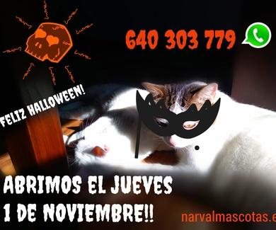 FESTIVOS ABIERTOS Narval Mascotas | 1 de Noviembre