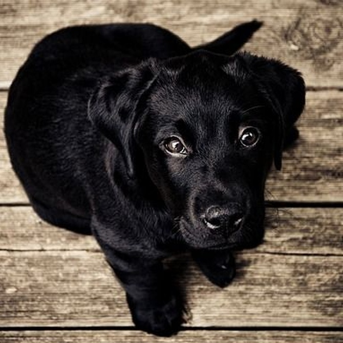 El suelo de madera y los perros