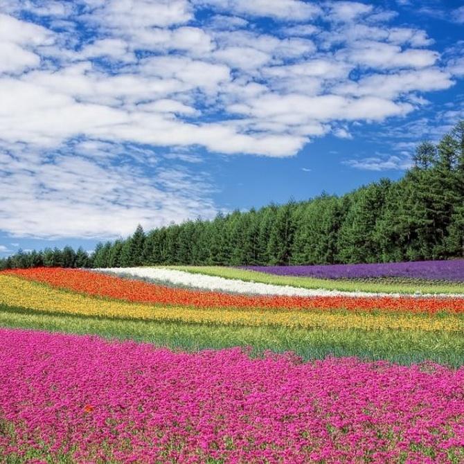 La moda de los jardines aromáticos y funcionales