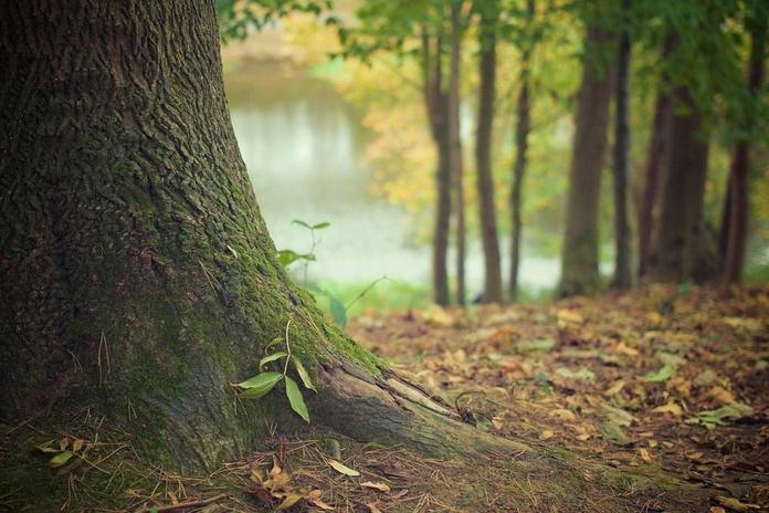 Repoblaciones forestales: Servicios de Cofoso