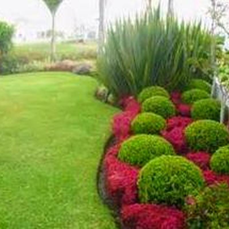 Jardineria.: Productos y servicios de Greenflor