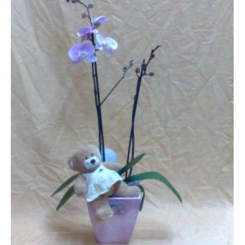 Composición plantas: Surtido floral de Floristería Fina