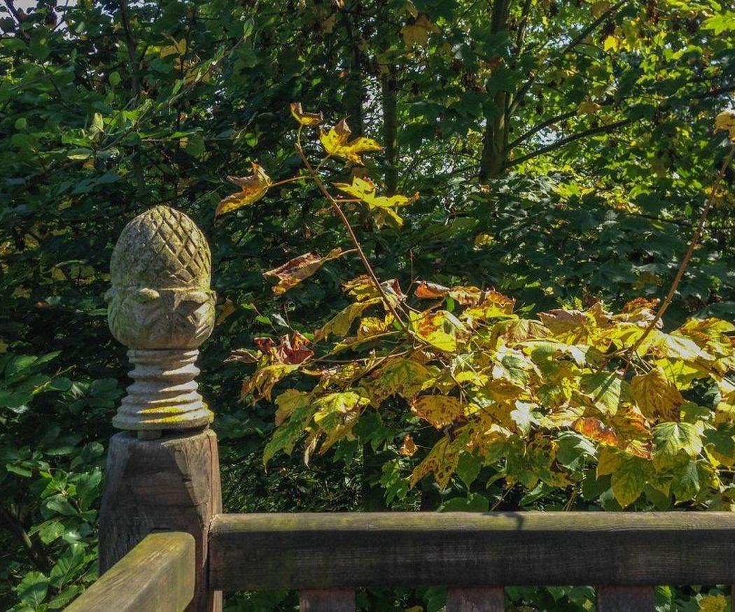 Los riesgos del jardín en verano