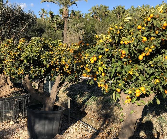 Árboles: Servicios de Garden Home Mallorca