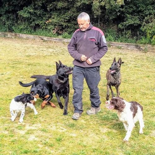 Centro de adiestramiento canino