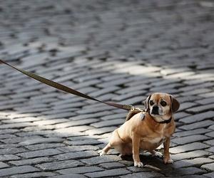 Accesorios que no le pueden faltar a tu perro