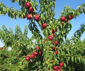 Exportador de frutas en Huelva | Frutas Maripí