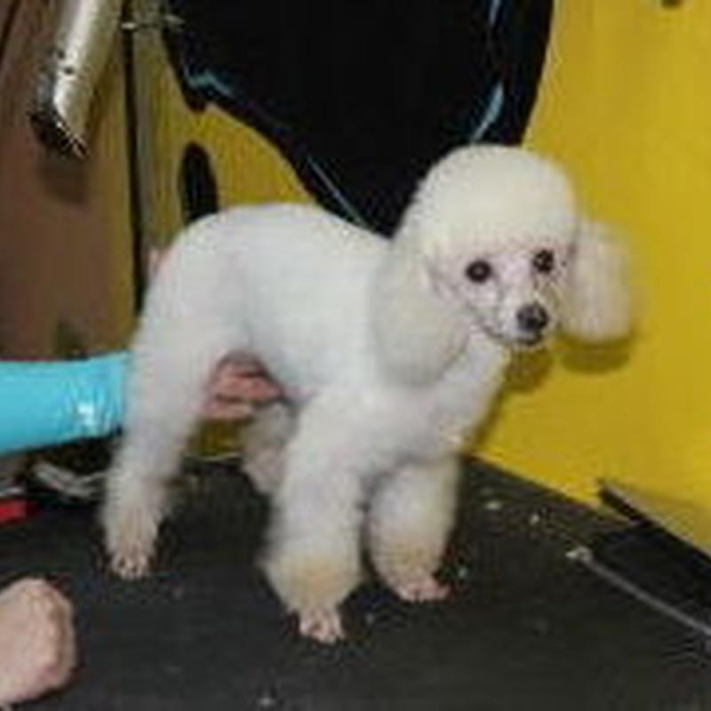 Corte: Servicios de Pets-R-Us
