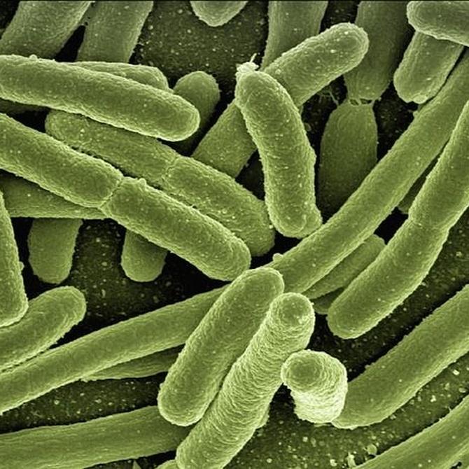 Bacterias peligrosas por suciedad