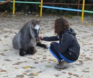 Especial caballos y ponis