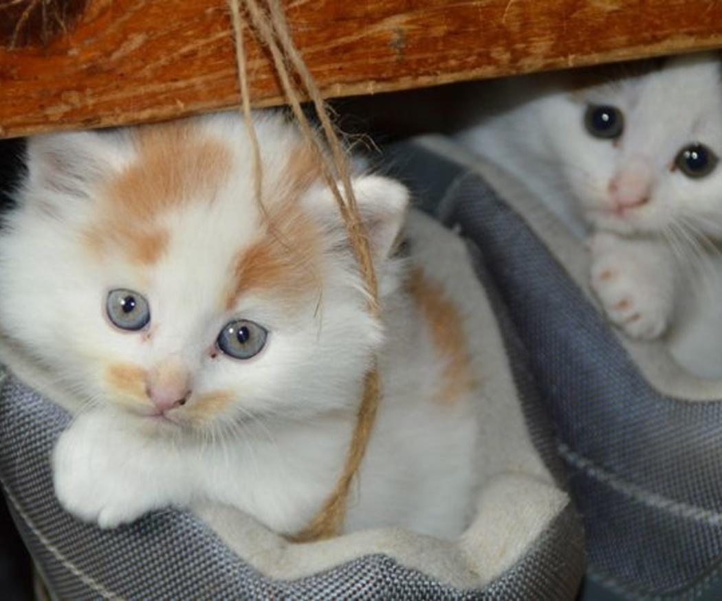 Cuidado del pelo de los gatos