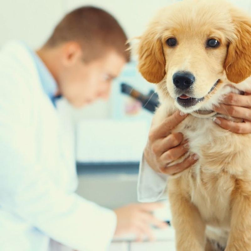 Análisis clínicos y laboratorio propio: Servicios veterinarios de Clínica Veterinaria Dobermann II