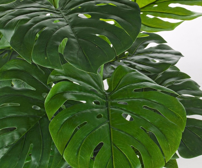 Plantas y flores decorativas: Tienda online  de COSCO. Tel 928988528