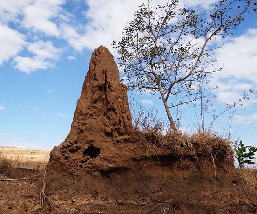 Lugares habituales para las termitas y cómo prevenirlas