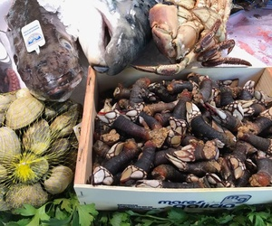 Mariscos y pescados de calidad en Valencia