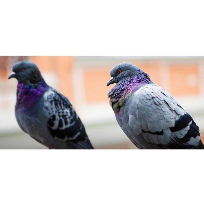 Control de aves: Servicios de Aplicaciones FumiServ