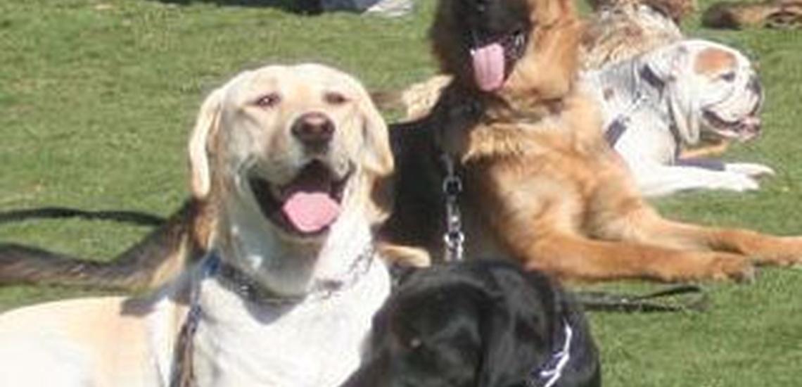 Residencias caninas en El Vallès perfectamente acondicionadas