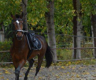 Pupilaje de ponis: Servicios de Club Hípico de Cenes