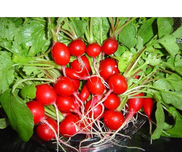 Rabanitos : Productos de Mundifruit