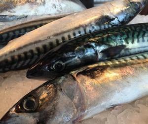 Venta de pescados frescos