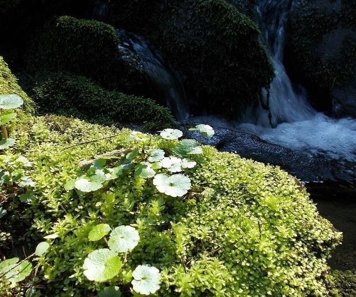 Agua de Roca| Terapias Alternativas Isabel | Flores de Bach en Zaragoza