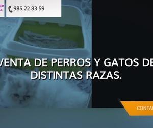 Peluquería canina en Oviedo - El Gato Persa